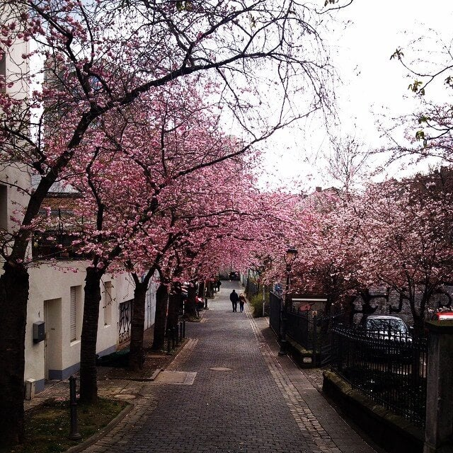 bonn primavera