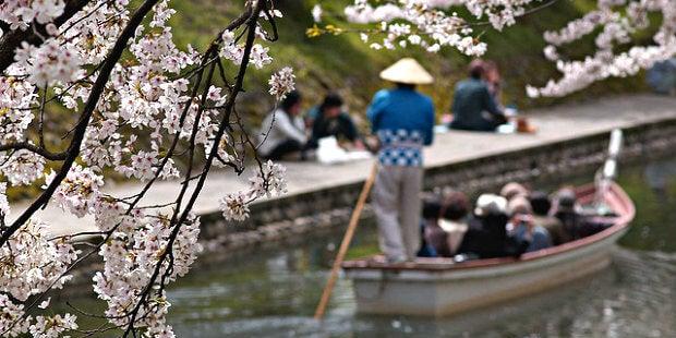 cerezos flor japon