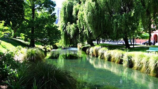 jardin botanico de nueva zelanda en primavera