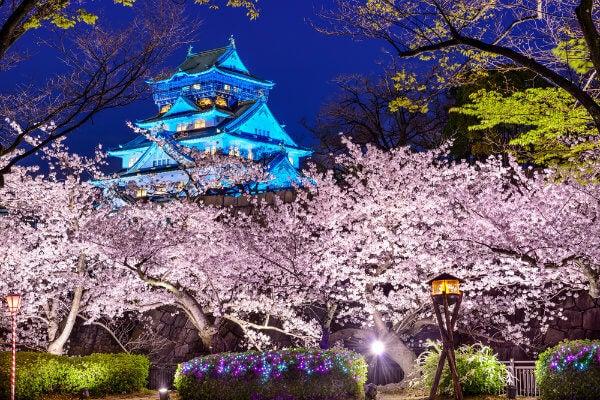 """Japón en flor: dónde y cuándo ver los cerezos durante el """"Hanami"""" castillo de Osaka"""