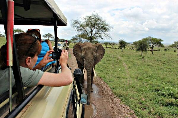 elefante en un safari serengheti