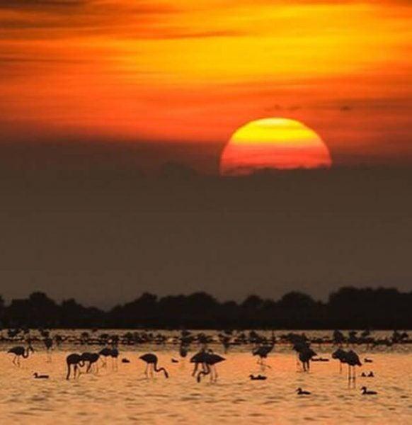 Atardecer en el Delta del Ebro. Foto de @deltadelebre