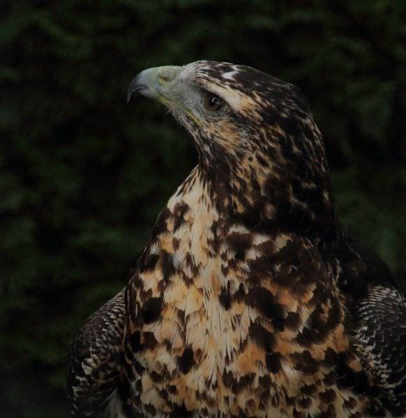 Aves del Montseny. Foto de @nan2302