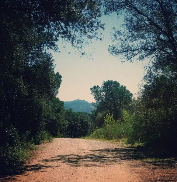 Camino en el Montseny. Foto de @irma_lo