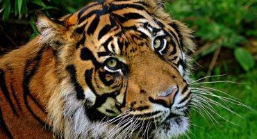 Planes en familia: Ruta de zoos por Europa