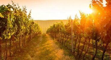 10 razones para visitar La Rioja