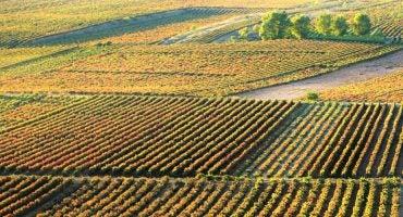 La Rioja en un día: ruta del vino