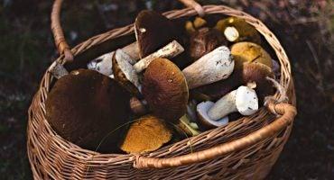 Turismo micológico. Los mejores lugares para recoger setas en España