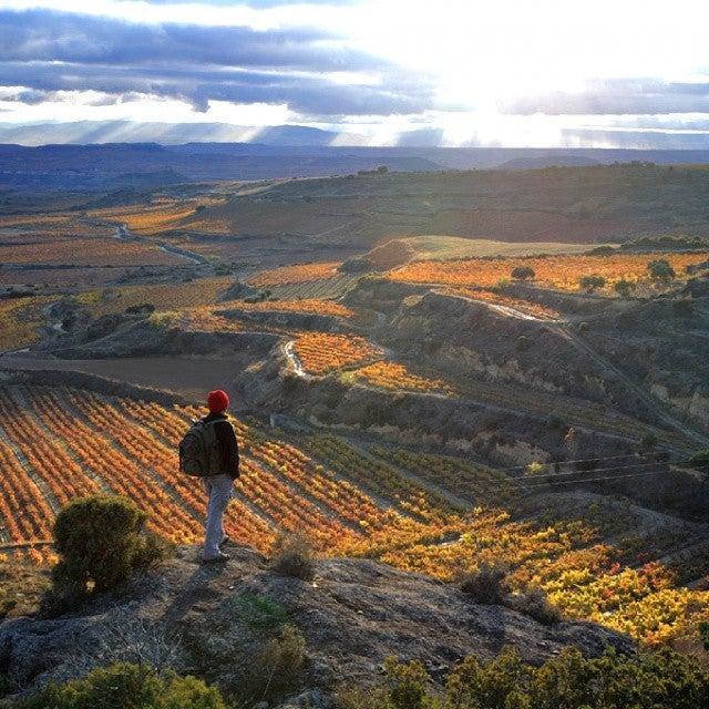 vistas de los viñedos