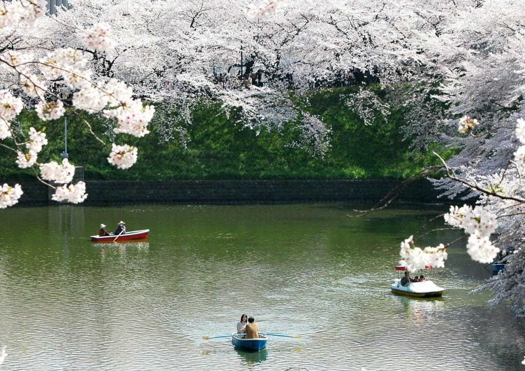 """Japón en flor: dónde y cuándo ver los cerezos durante el """"Hanami"""". Parque"""