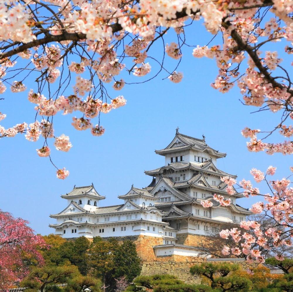 """Japón en flor: dónde y cuándo ver los cerezos durante el """"Hanami"""". Osaka"""