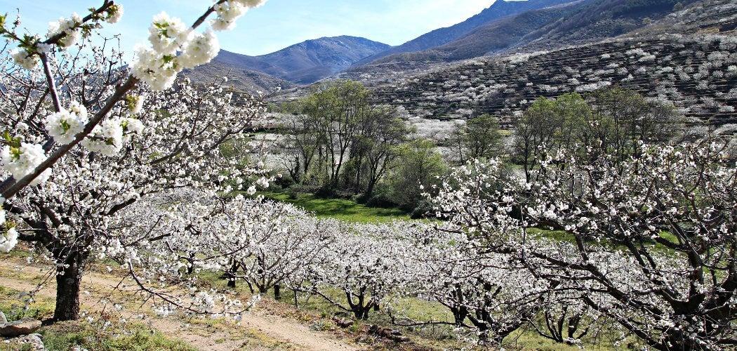 valle_del_jerte