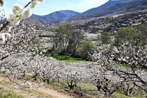 15 lugares de España para ver la primavera