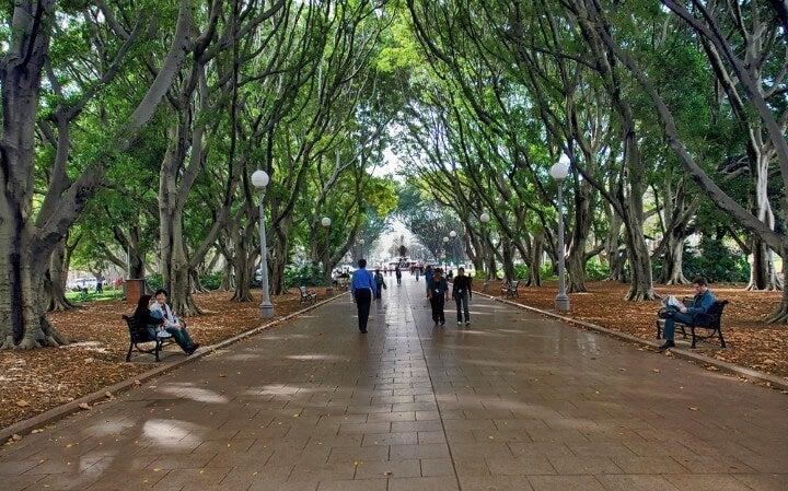 Paseo con sombra de árboles en Hyde Park, Sídney