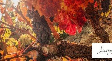 Gana una estancia en La Rioja y ¡sumérgete en el otoño!