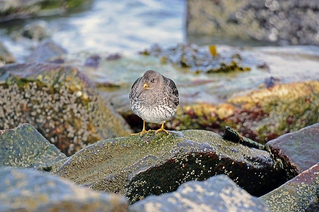 Kiwi uccello edreams blog di viaggi