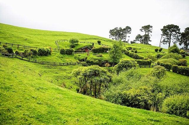 paesaggio verdeggiante nuova zelanda edreams blog di viaggi
