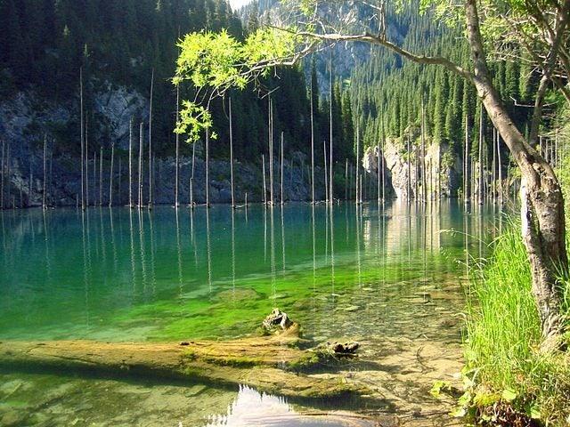Los bosques más bellos del mundo. Kindi lake