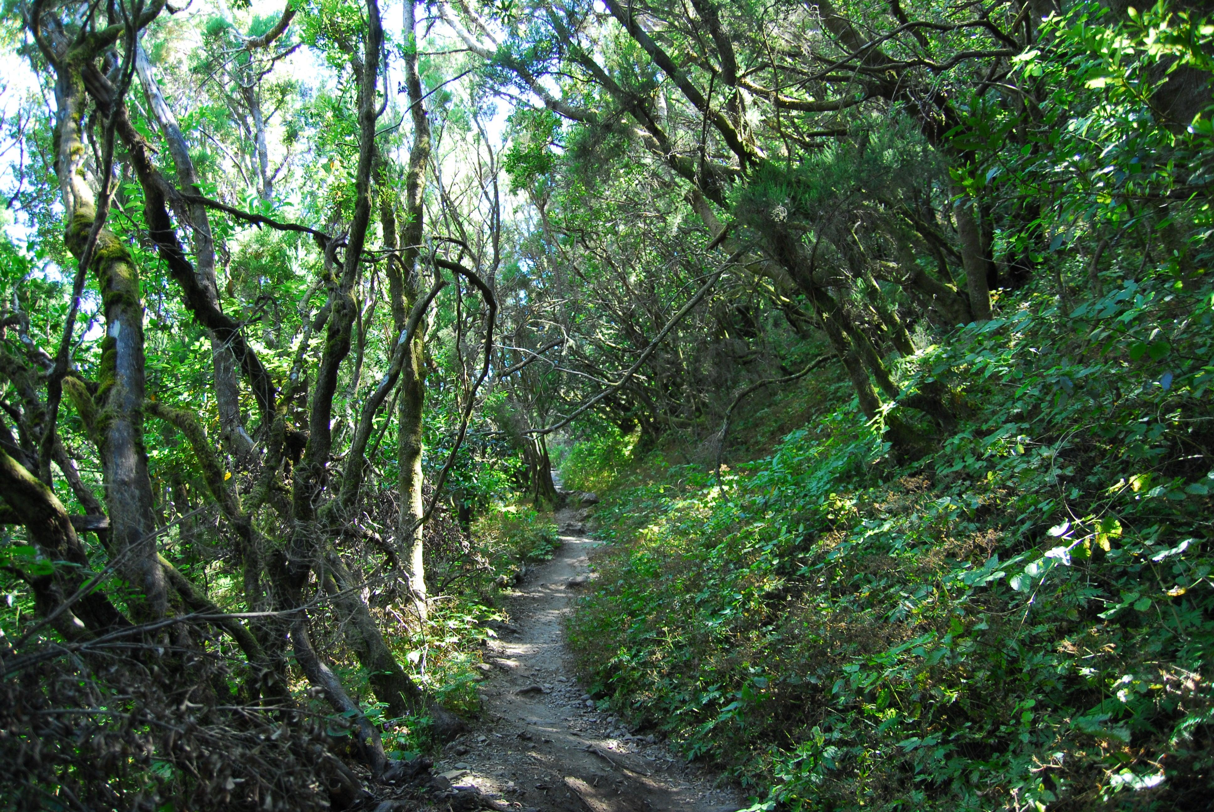 Los bosques más bellos del mundo . La Gomera