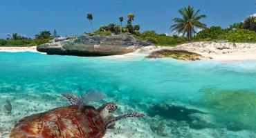 11 imprescindibles en México