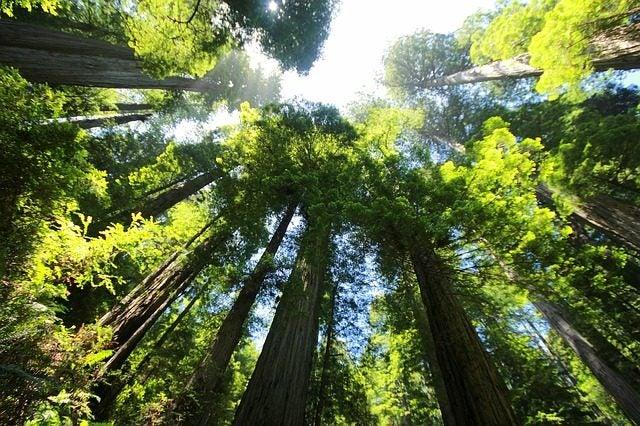 Los bosques más bellos del mundo. Yosemite, secuoyas
