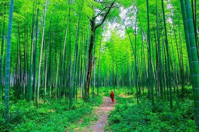 Los bosques más bellos del mundo. Bosque de bambú