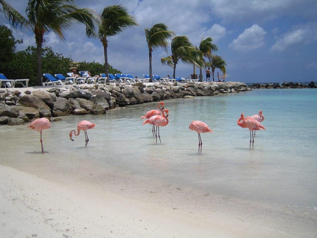 6 Playas con animales increíbles Playa de los flamencos Aruba