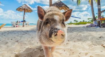 6 Playas con animales increíbles