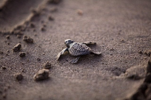 Playa de las tortugas, Akumal México