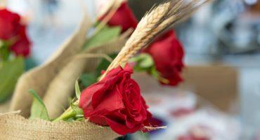 Sant Jordi, el día del libro y la rosa