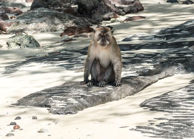 6 Playas con animales increíbles. Playa de los monos tailandia. Monkey beach