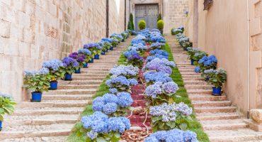 Disfruta de la primavera en la Fiesta de las Flores de Girona