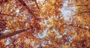 Destinos perfectos para este otoño