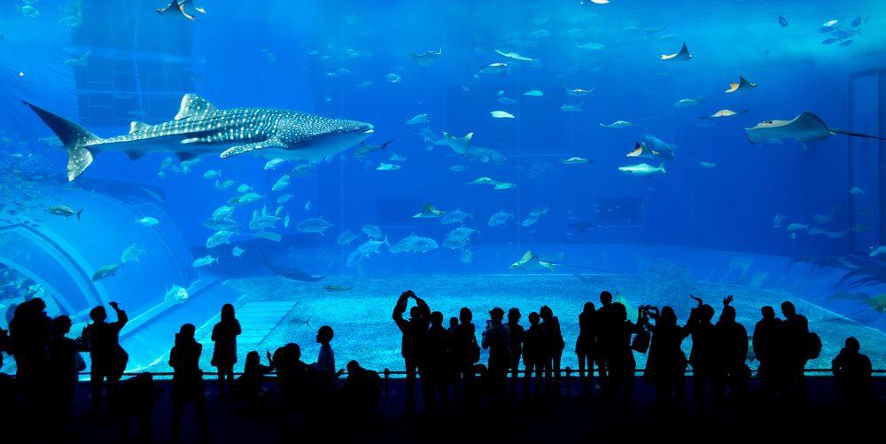 Aquario de Dubái, en el Dubái Mall