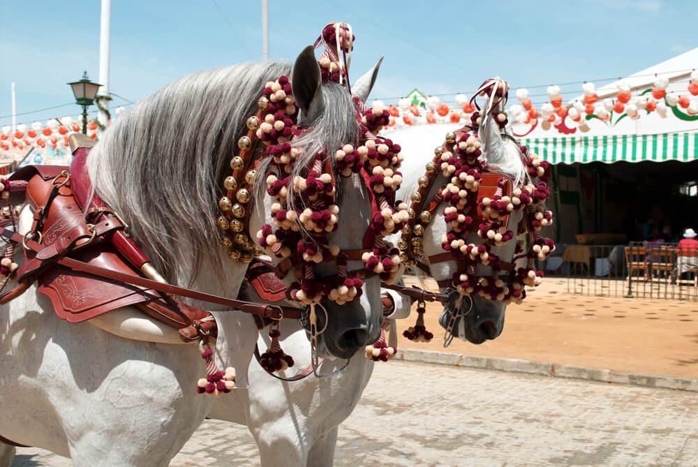 Caballos blancos engalanados para la Feria de Málaga con caseta el fondo