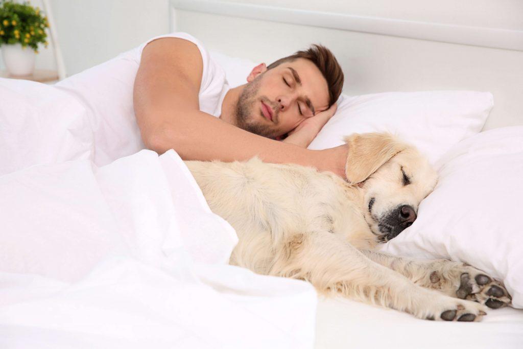 Un chico joven duerme junto a su perro de raza golden retriever color canela ambos en una gran cama blanca