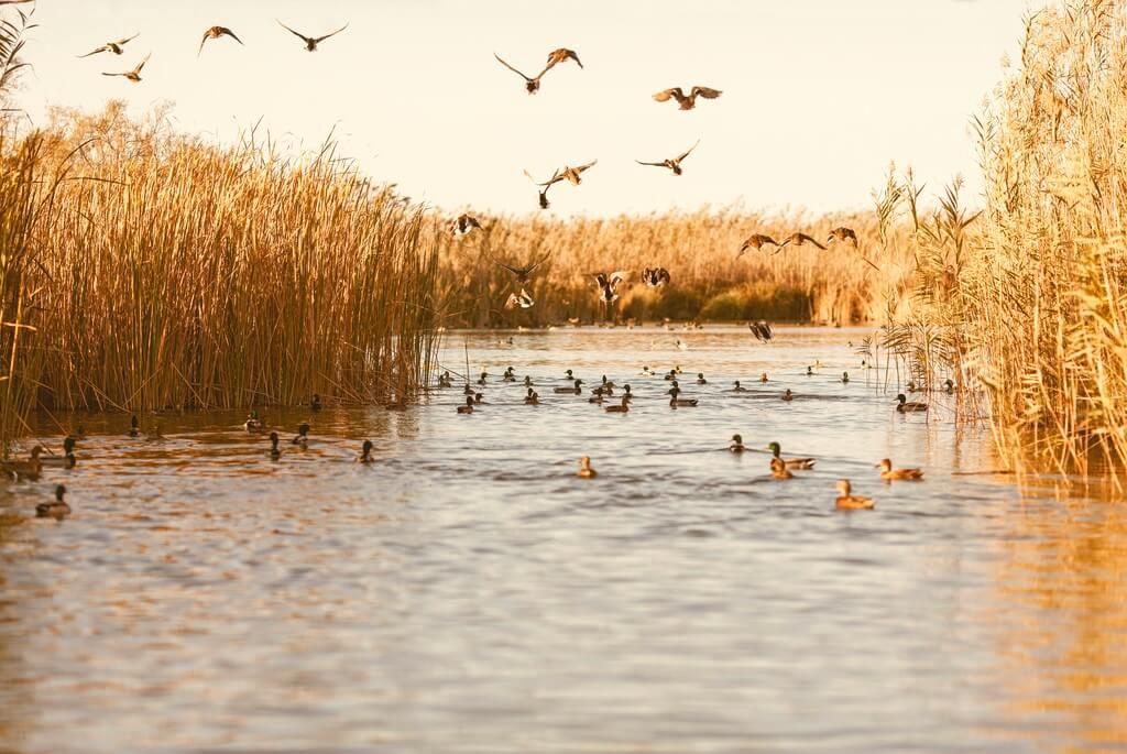 Pájaros levantan el vuelo en el Parque Natural de l'Albufera, a 10 kilómetros de València