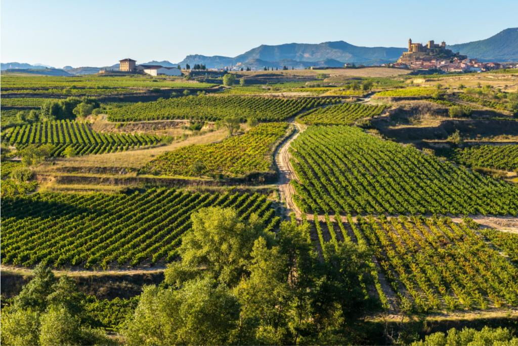 Viñedos San Vicente de la Sonsierra La Rioja