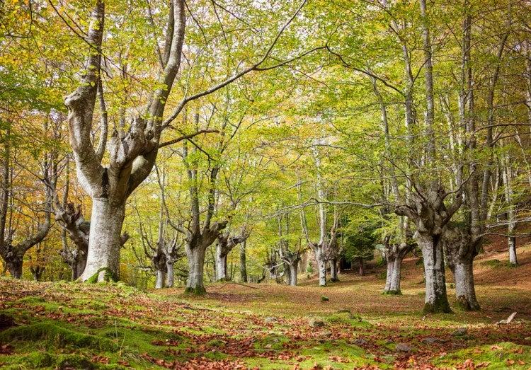 Parque Natural de Gorbeia en el País Vasco
