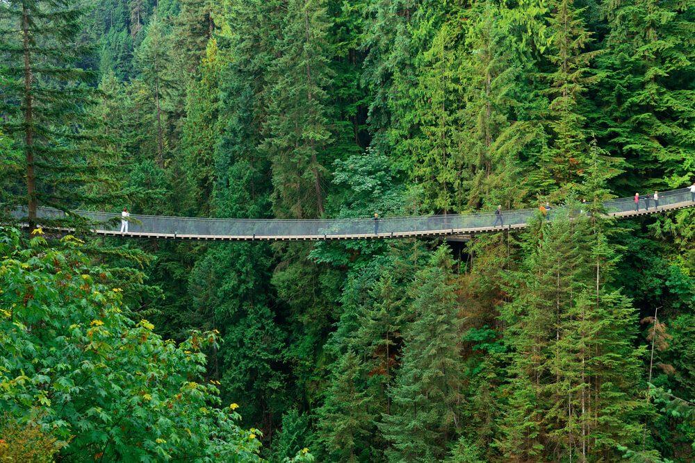 Puente colgante de Capilano, Vancouver, con gente atravesándolo en medio de las coníferas que lo rodean